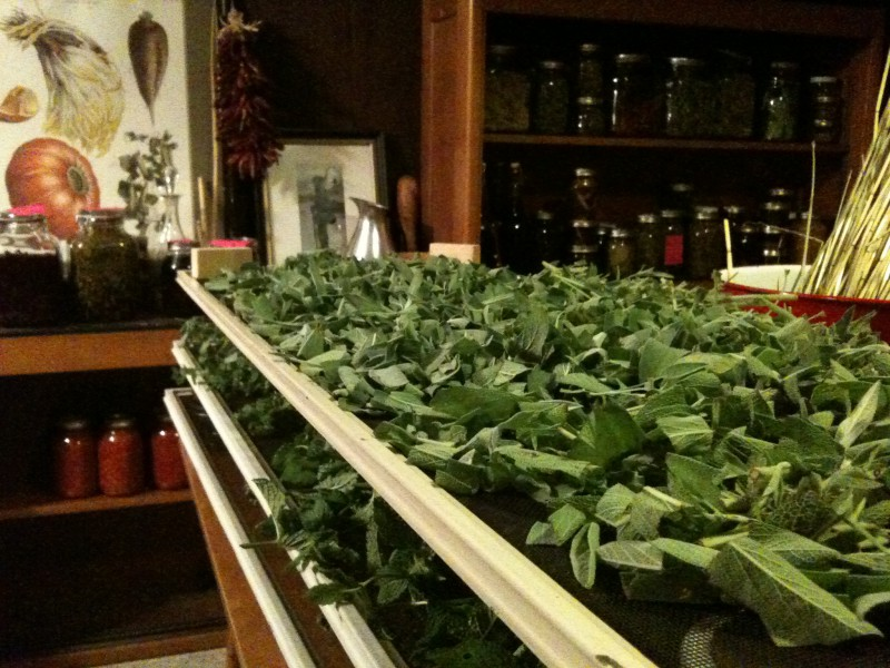 From the garden: Harvesting your own hyper-local herbal apothecary ...