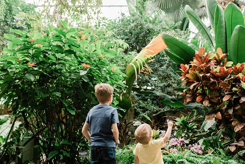 Meijer Gardens' 25th Annual Butterfly Exhibition Explores an Era ...
