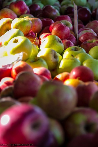 a selection of beautiful Michigan Apples
