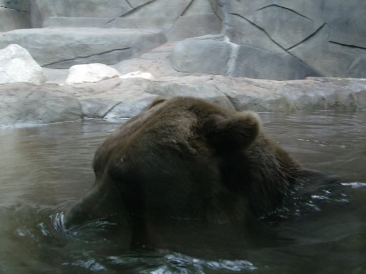 Attendees of Zoobilee will get the opportunity to see how the zookeepers train their bears.