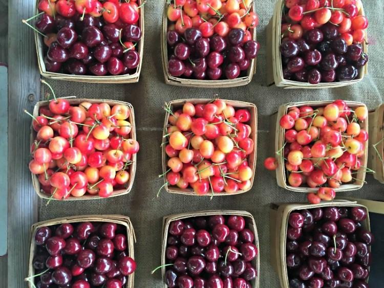 Locally grown cherries