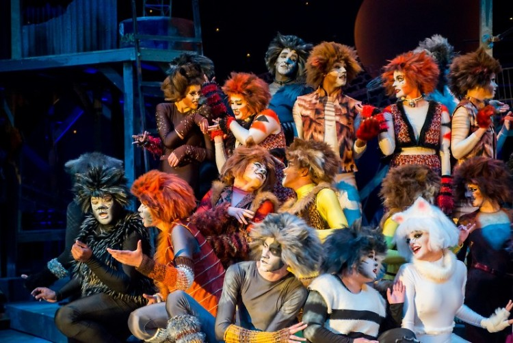 The Ensemble, a motley crew, taught how to talk to cats.