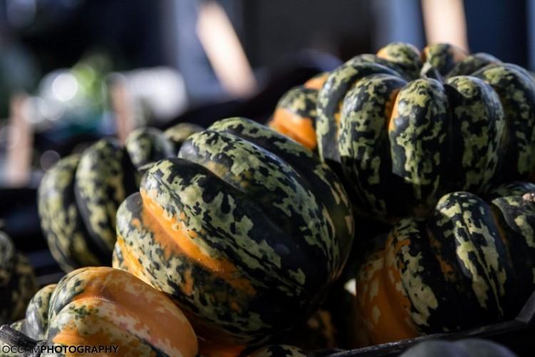 MI Gourds