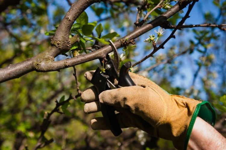 Keeping trees healthy is important to communities of all sizes.