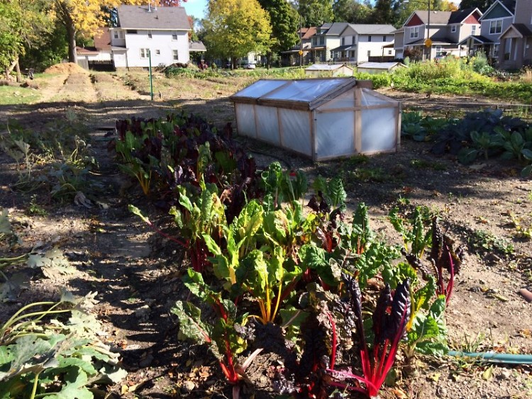 Urban Roots community farm grows fresh vegetables in the Southtown neighborhood and focuses on education.