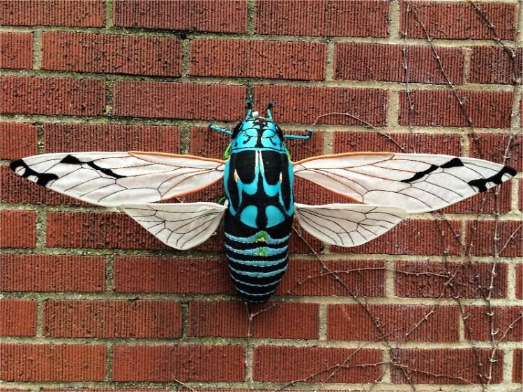 Zammara Cicada, 2015