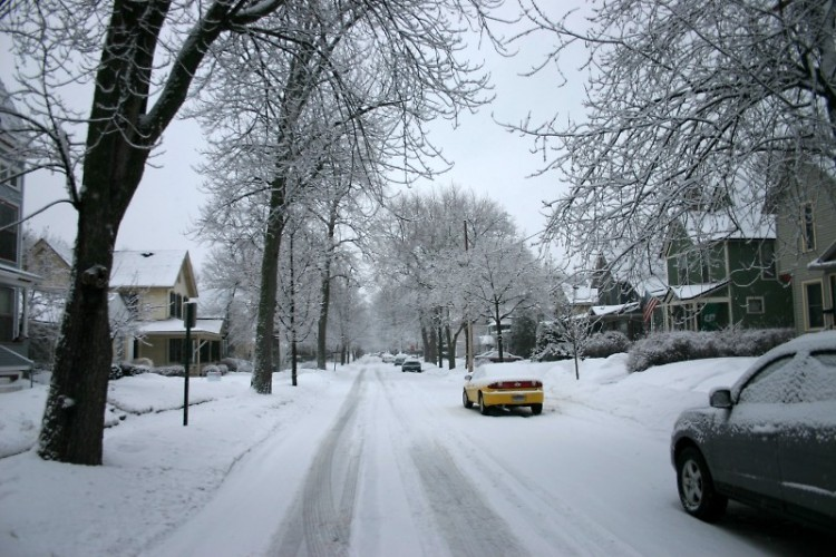 Winter wonderwoods!
