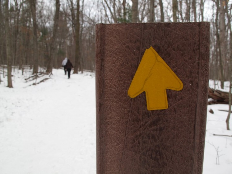 All arrows point somewhere in Siedman Park (and it's always a better hike when you go with neighbors).