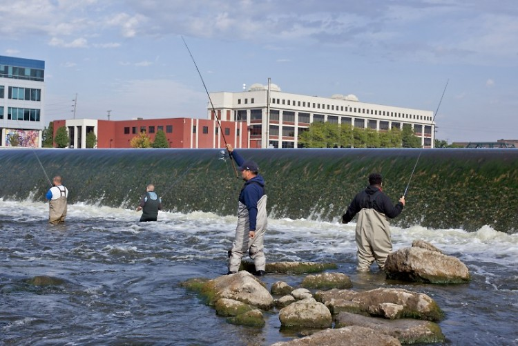 Fishing for salmon in the Grand River