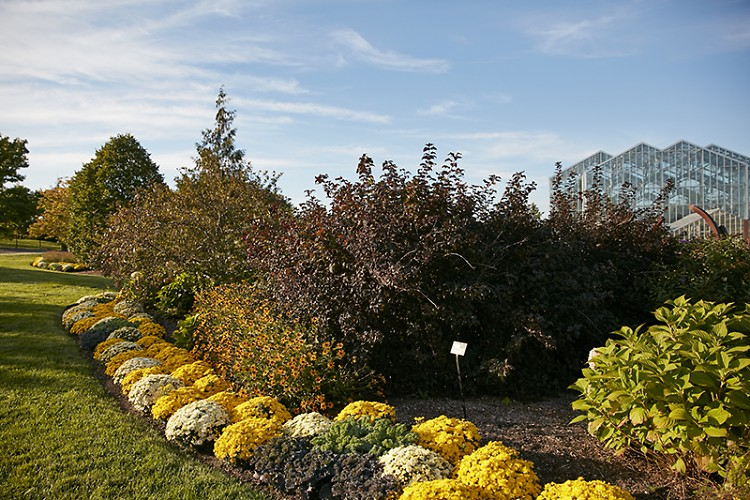 Frederik meijer gardens sculpture park celebrates autumn - Frederik meijer gardens and sculpture park ...