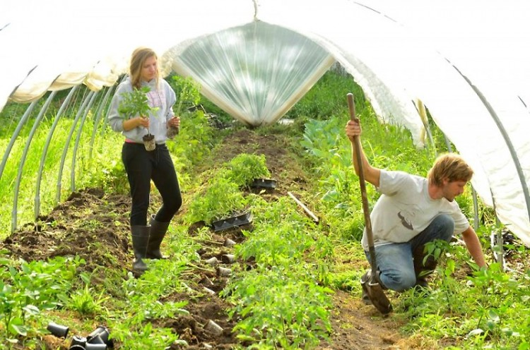 Riliegh Haan and Lance Kraai planting peppers in the catepillar tunnel at New City Urban Farm
