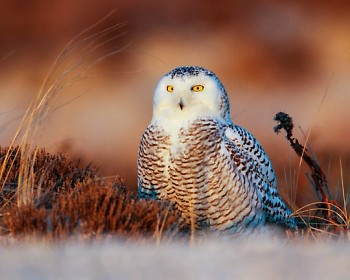 "Michiganders might recognize the area's incoming snowy owls from the ""Harry Potter"" film series."