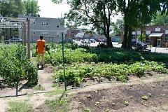 The Urban Roots Community Garden