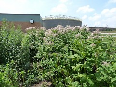 The River of Dreams rain garden is located at the Water Resource Recovery Facility