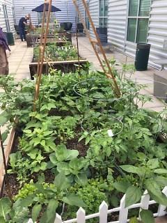 Downtown Garden