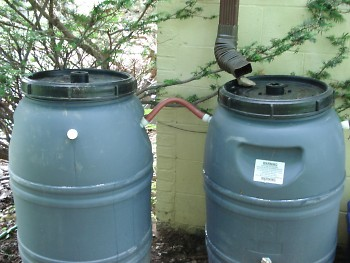 Pictured here, rainwater is diverted from a spout into rain barrels.