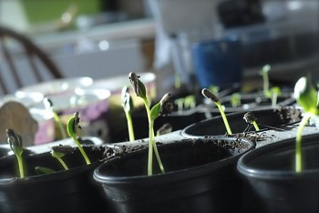 Some early spring seedlings