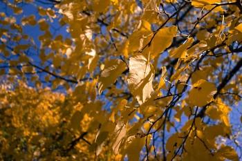 Fall in Grand Rapids.