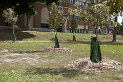 Newley planted trees on the north end of the school grounds