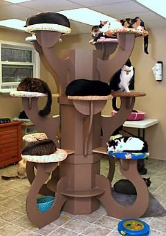 Crash's Landing Cat Rescue & Placement Centers