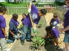 Club members planting their Summer garden at the Steil Club.