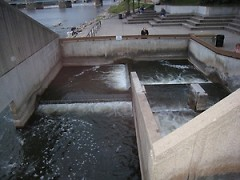 The Fish Ladder sculpture is a series of stepped pools that allow spawning fish to circumvent Sixth Street Dam.