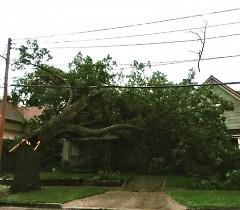 A hollow tree fell on a house on Fitzhugh Street.