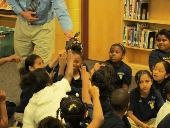 Critchlow distributes alligators to the class at MLK elementary