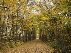 Trails such as the 22-mile William Field Memorial Hart-Montague Trail are one of the many perks to living in Michigan.