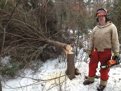 Sam Hudnutt stands beside a black spruce he felled to create horizontal cover for snowshoe hare.
