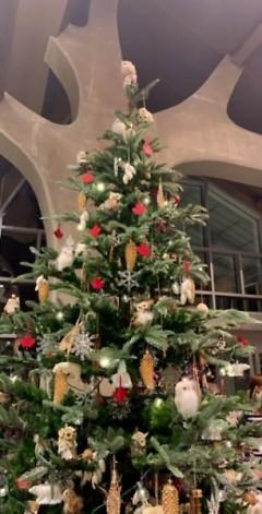 Canada's Christmas tree.