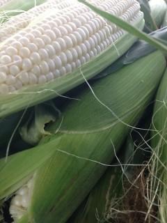 Heavenly Bliss Corn at FSFM