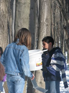 Students checking the sap in the buckets.