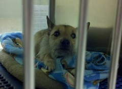 This Cairn terrier is among the many dogs available for adoption at the Kent County Animal Shelter.