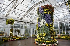 """Chrysanthemums and More!"" mum column at Frederik Meijer Gardens & Sculpture Park"