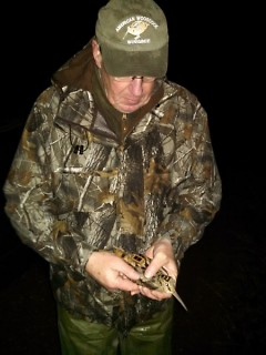 Al Stewart, DNR upland game bird specialist, places a telemetry unit on a woodcock.