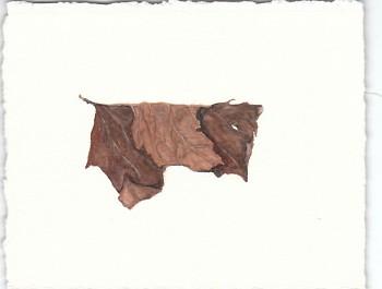 """""""Leaf"""" by Steffanie Rosalez"""