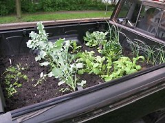 Eric's spring crops included garlic, radishes, broccoli and leafy greens.