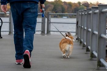 Man walking dog at Reeds Lake Trail in East Grand Rapids.